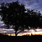 Bioregionalism, peacemaking, fig trees and vines